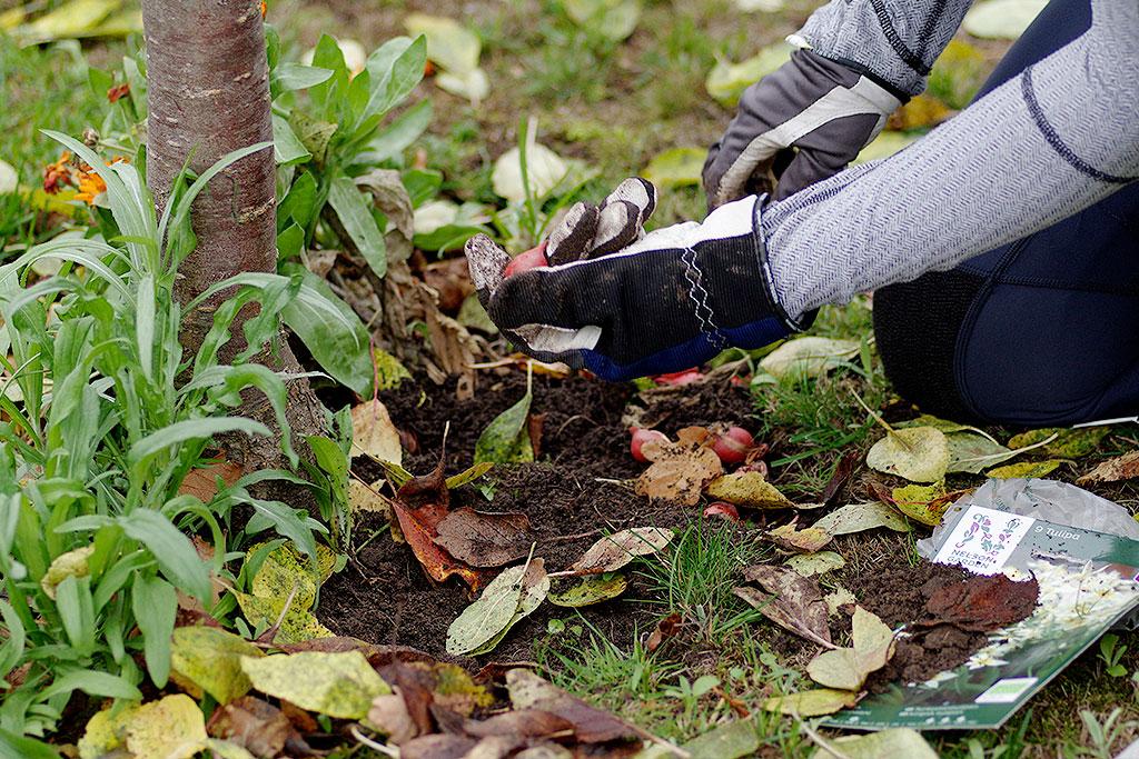 Passa på att vara utomhus under de få dagstimmar som kännetecknar november.