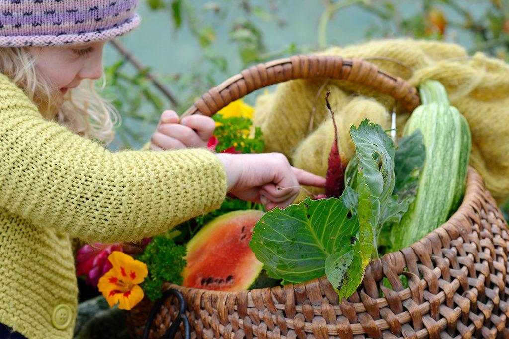 Med årets frönyheter vill vi att fler ska leka i sin odling. Foto: Anna Lindeqvist