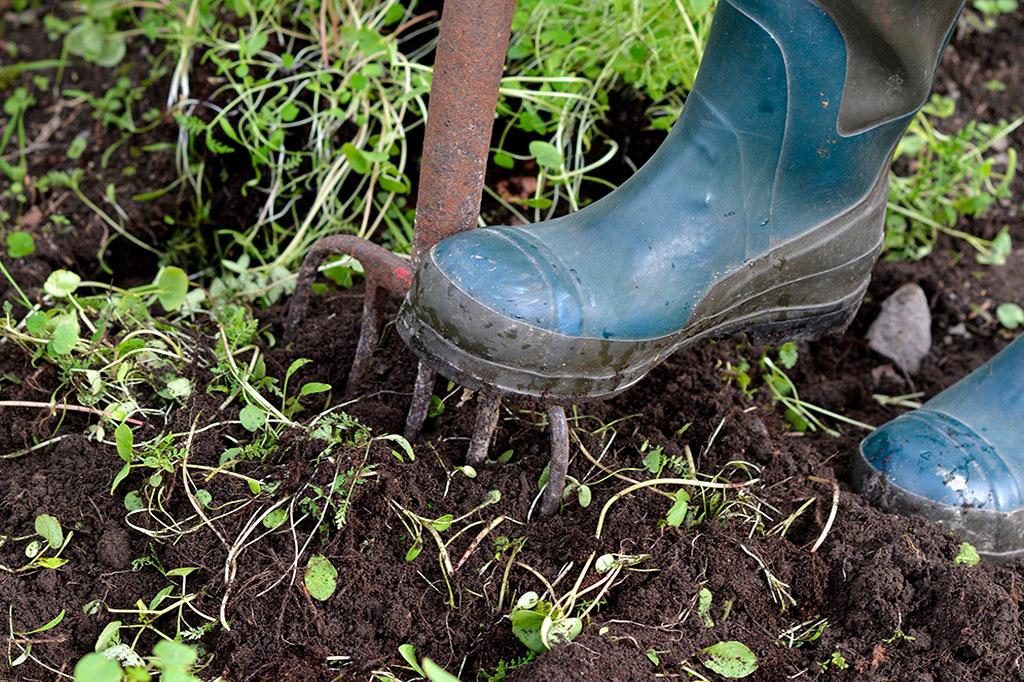 När du plöjer ner gröngödslingsväxter tillför du näring och förbättrar jordens struktur. Foto: Markus Danielsson