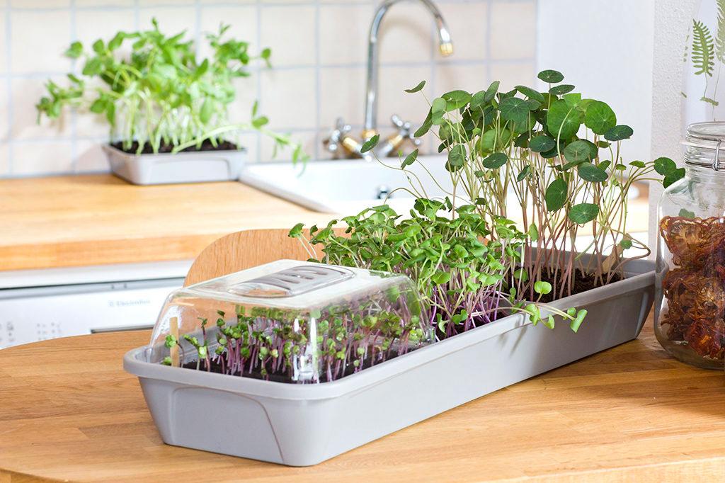 Micro Leaf 3-box låter dig odla flera sorter – eller samma sort i flera omgångar för att alltid ha någonting redo att skörda. Foto: Annika Christensen