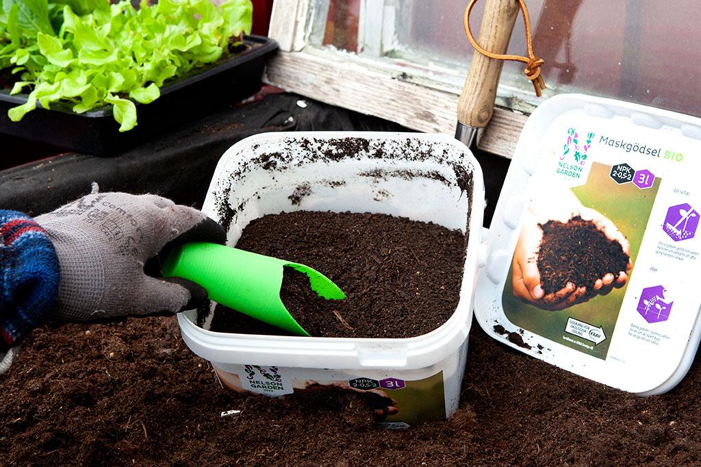 Maskgödseln kan enkelt strös ut i pallkrage, rabatt eller kruka. Du kan också använda den som flytande – använd den som ett kallbryggt te. Foto: Annika Christensen