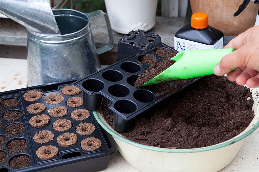 Fyll cellerna med odlingspluggar eller jord. Foto: Annika Christensen
