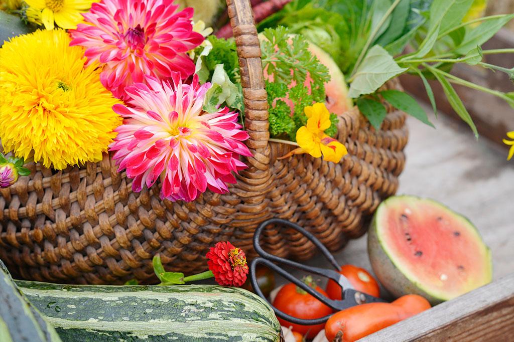 Gott om näring är en förutsättning för en god skörd. Foto: Anna Lindeqvist
