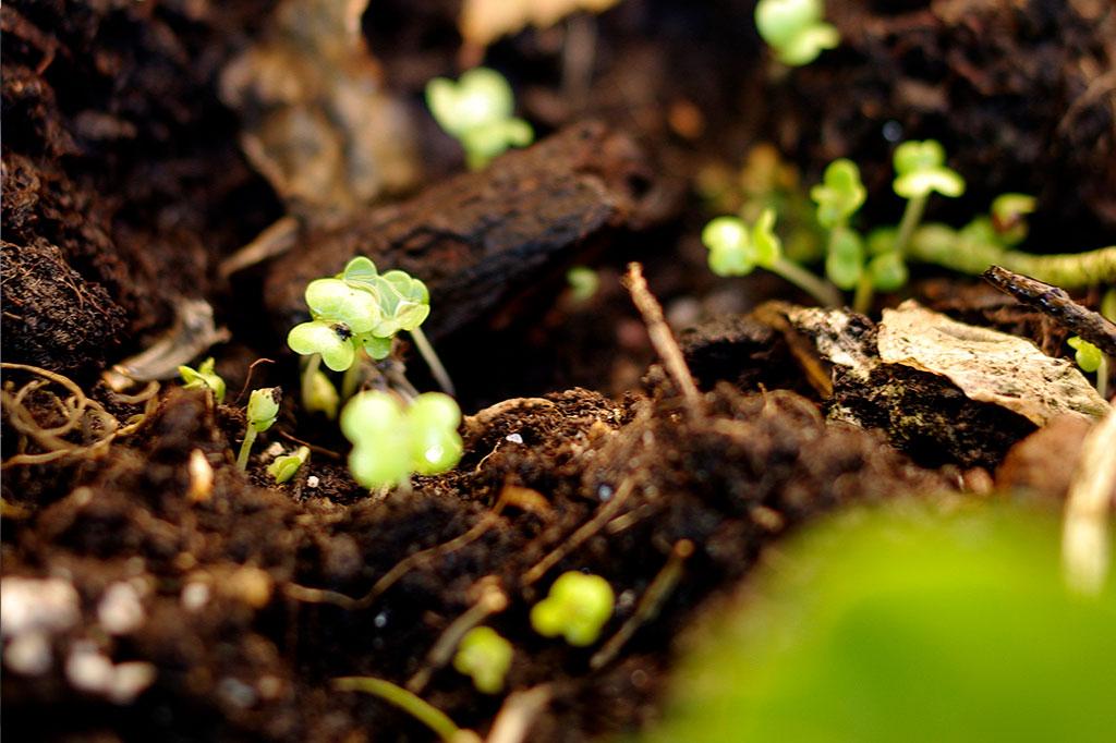 När gror vintersådden? Foto: Lovisa Back
