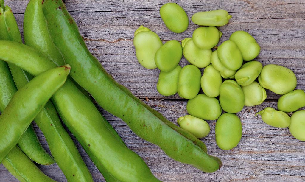 Förutom baljan har varje bondböna ett tunt skal som de flesta väljer att skala bort. Foto: Anna Lindeqvist