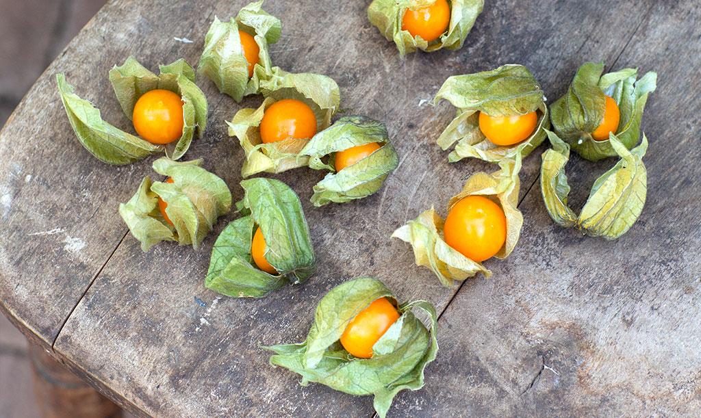 Visst går det att odla exotiska frukter uppe i Norden! Foto: Annika Christensen