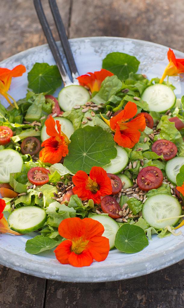 Både blad och blommor går att äta – de passar fint att dekorera sommarens sallader med. Foto: Annika Christensen