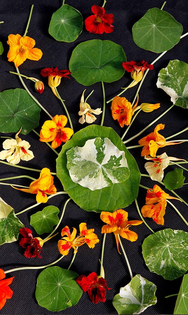 Blomsterkrassen blommar rikligt och bjuder in till blomsterpyssel! Foto: Annika Christensen
