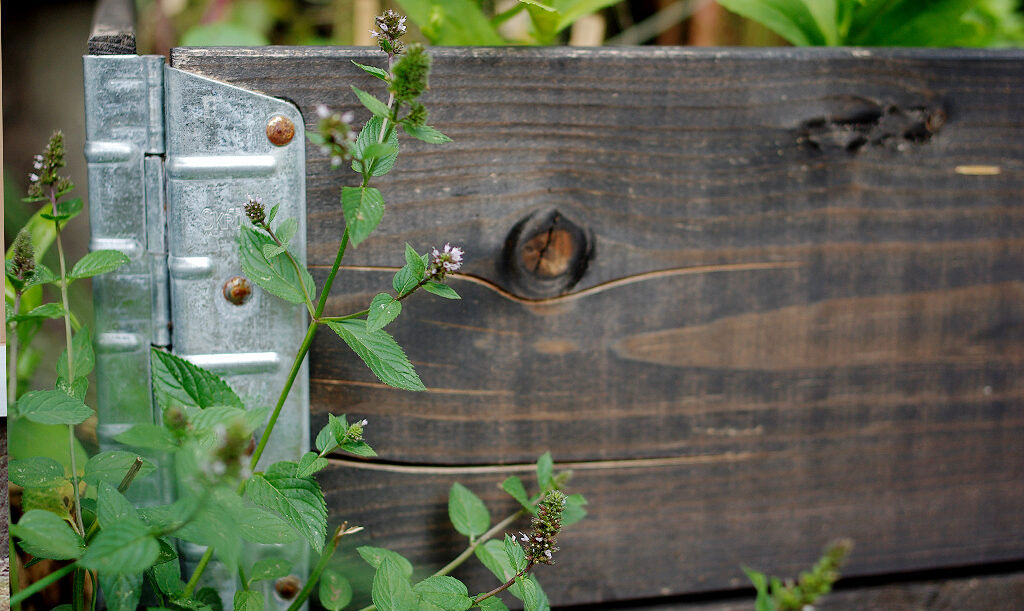 Odla i pallkrage. Foto: Lovisa Back