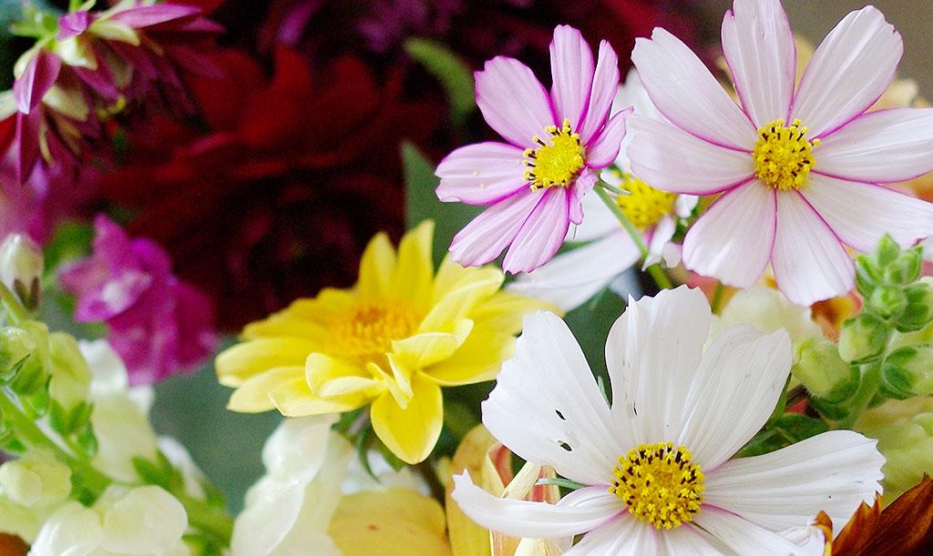 Slösa med buketter! Rosenskäran är en underbar snittblomma som blommar mer och bättre ju mer du plockar. Foto: Lovisa Back