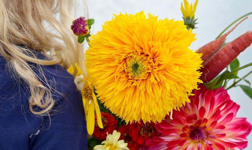 'Double Sunking' blir upp till två meter hög och blommar med fyllda, gyllengula blommor. Foto: Anna Lindeqvist
