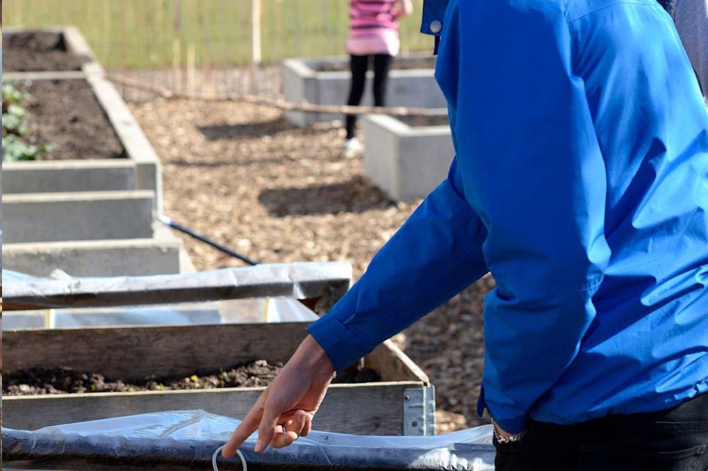 Elever från alla årskurser är delaktiga i odlandet. Foto: Markus Danielsson