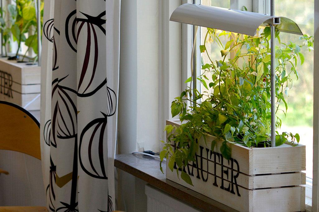 I matsalen odlas det i egengjorda hydroponiska odlingslådor. Foto: Markus Danielsson
