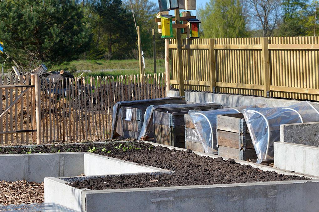 På Axonaskolan odlas det både utomhus och inomhus. Foto: Markus Danielsson