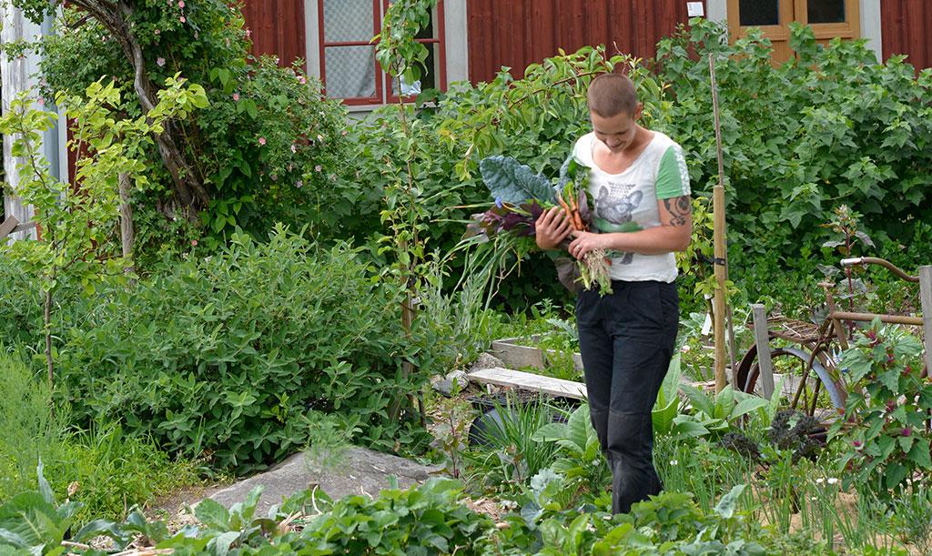 Skillnadens trädgård har vuxit fram och ger skörd året runt. Foto: Markus Danielsson