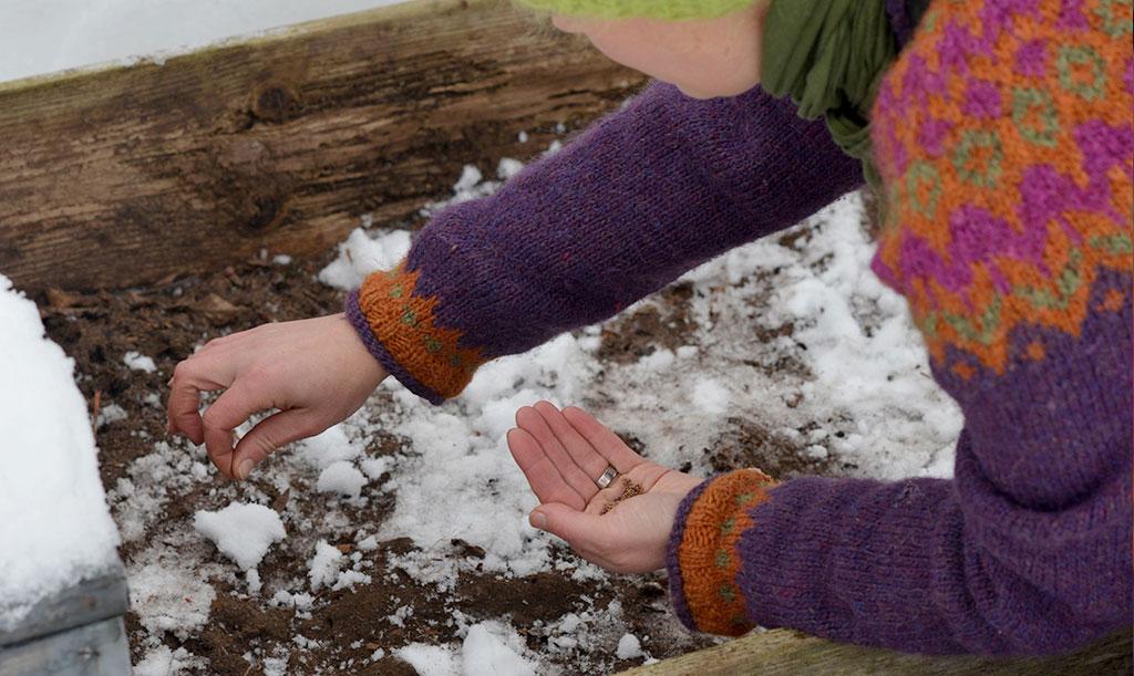 På den frusna jorden kan du så exempelvis grönkål, sallat och dill. Täck med ett tunt lager jord och invänta våren! Foto: Markus Danielsson
