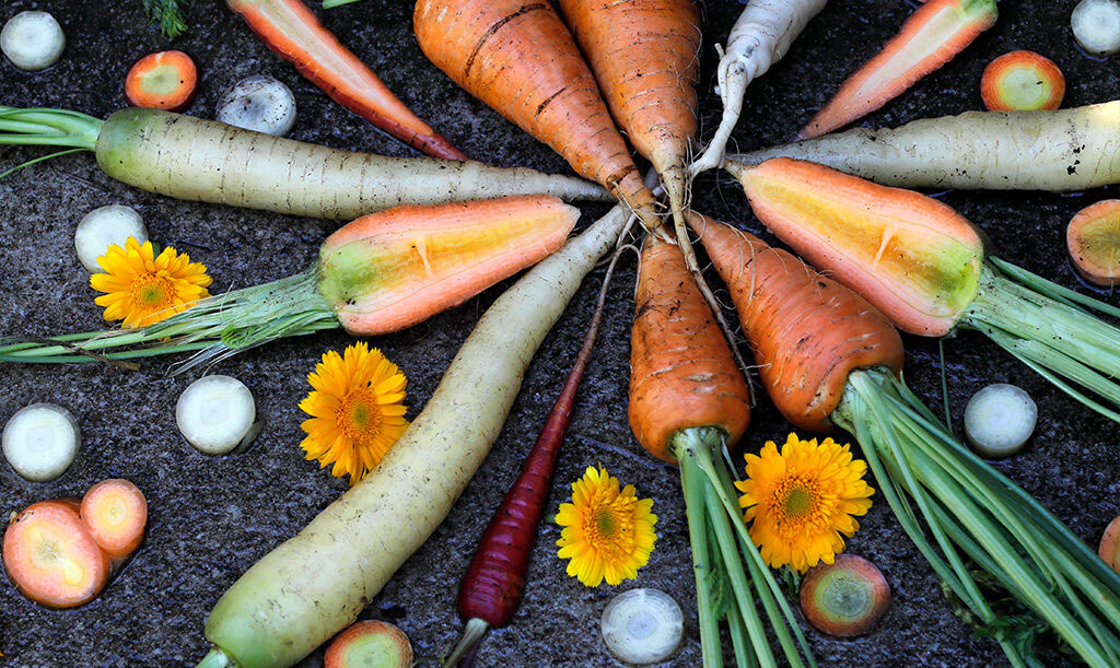 Använd gärna både blommor och blast i din morotsmandala. Foto: Annika Christensen