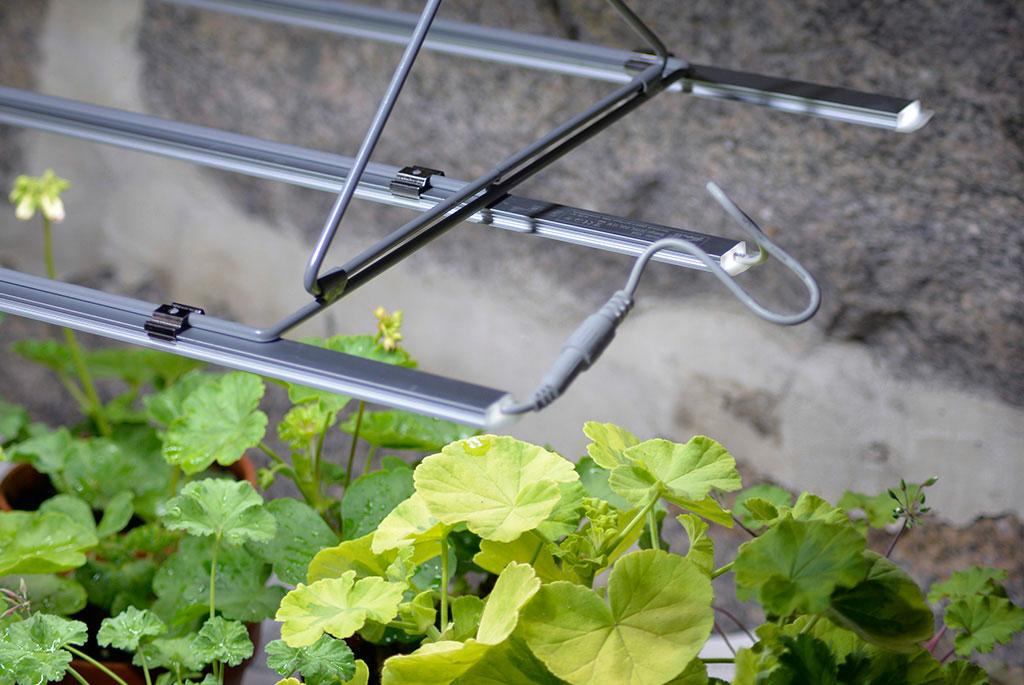 Även om du har ställt dina växter i ett svalare utrymme för övervintring, är det bra att kontrollera hur fuktig jorden är i krukorna. Foto: Markus Danielsson