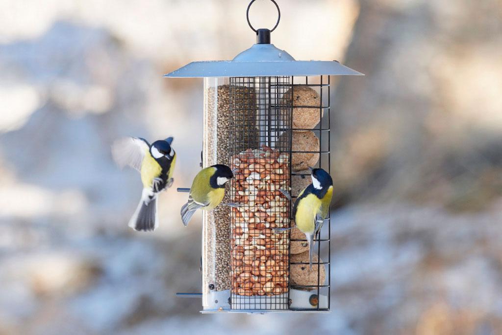 Talgbollar, jordnötter och hampfrö – allt ryms i en och samma fågelmatshållare. Foto: Bonnevier