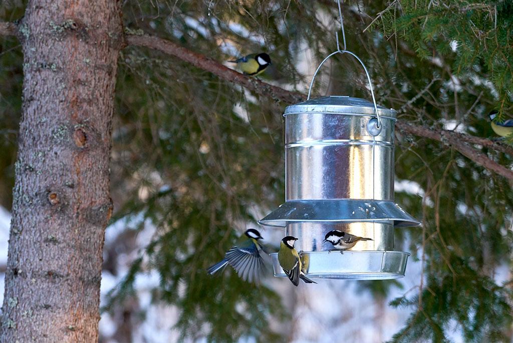 Under riktigt kalla vintrar går det åt mycket fågelmat. Foto: Bonnevier