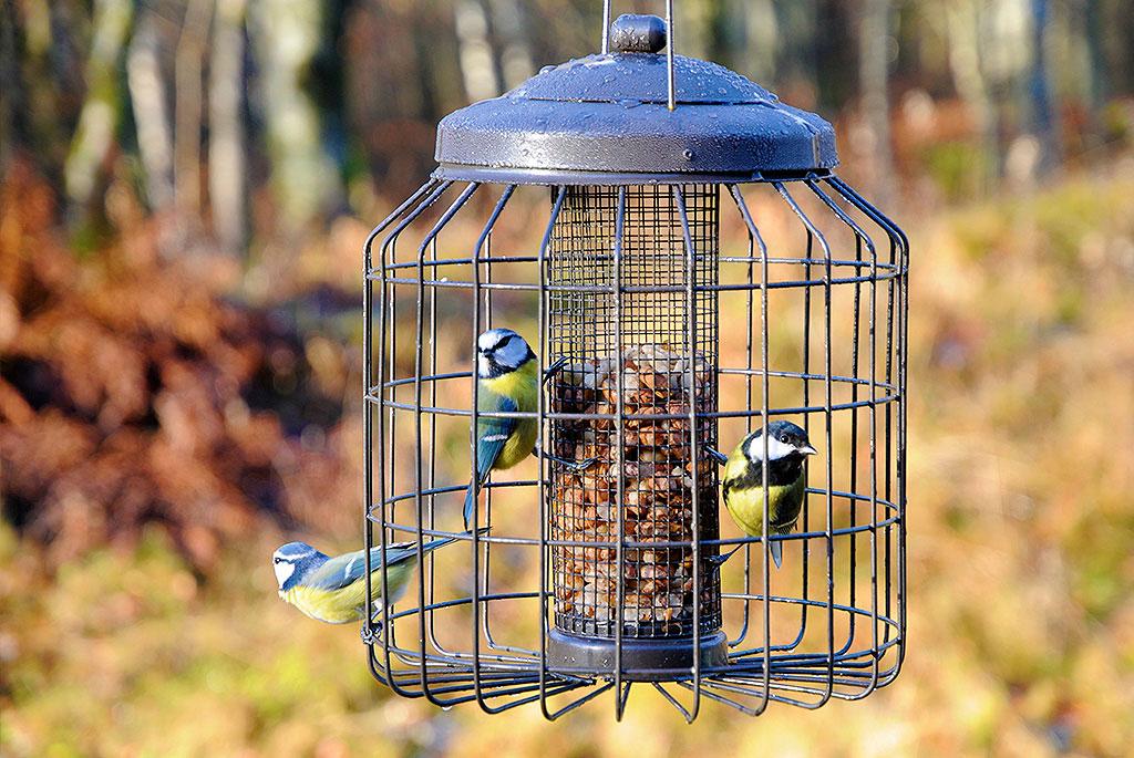 Ge fåglarna matro genom att skydda dem från rovdjur. Foto: Tom Martiniussen