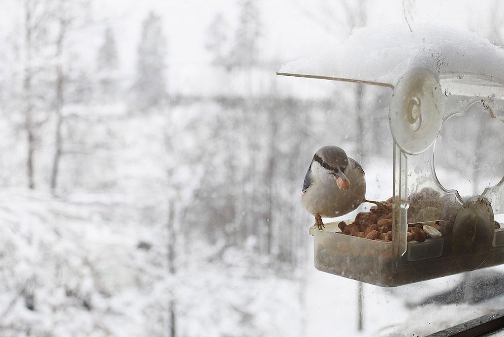 Sällskaps Foto: Kari H. Lauvli