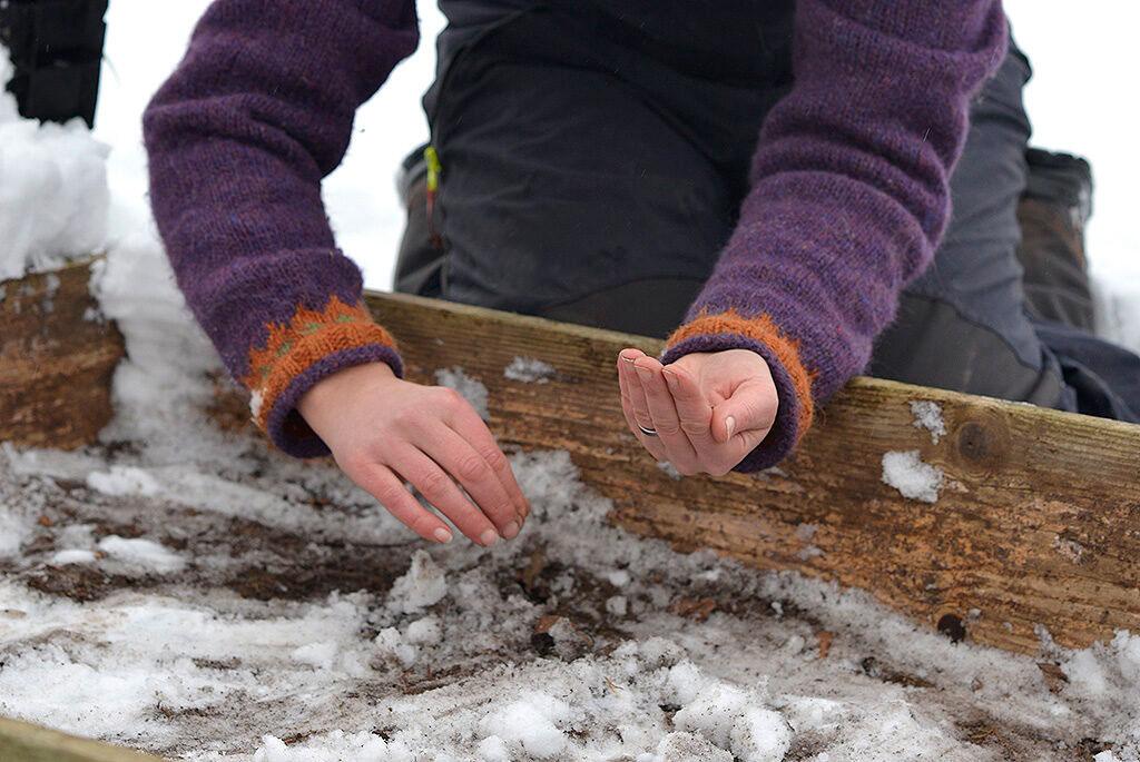 Lägg fröerna i en sträng över yta.