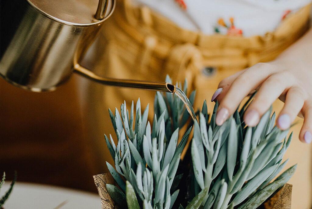 Ta hand om dina krukväxter på vintern.