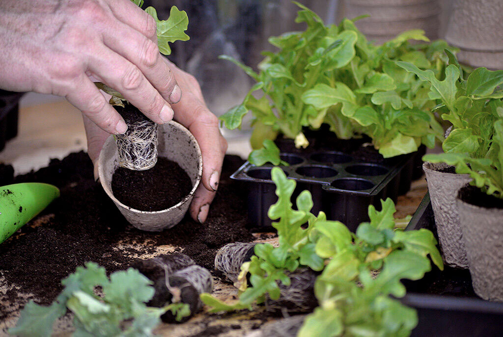 Välj ett minidrivhus som passar dig och odla upp fina plantor. Foto: Markus Danielsson