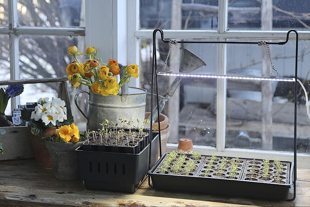 Välj ett minidrivhus som passar dig och odla upp fina plantor. Foto: Vibeke Svenningsen
