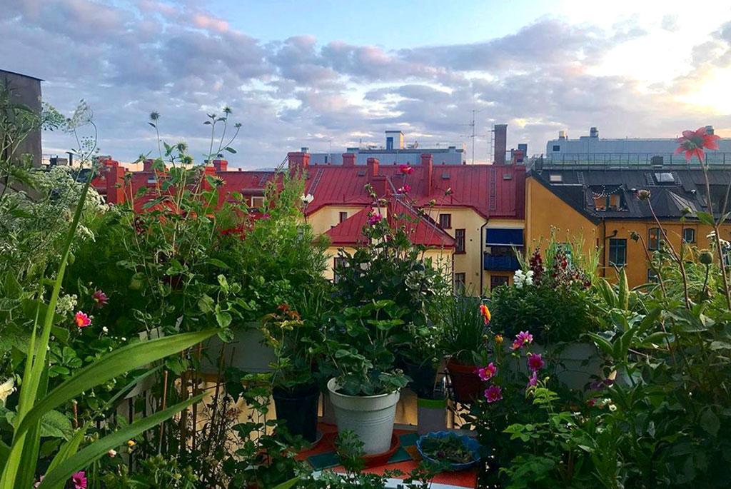 Utsikt från terrassen. Foto: Lars Själander