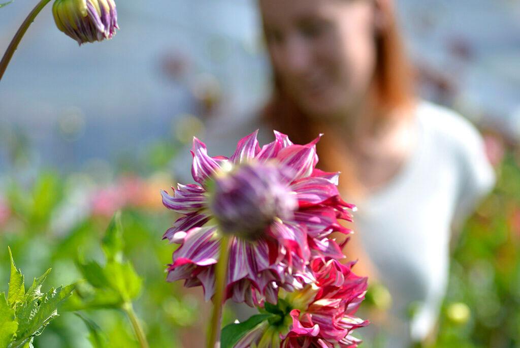 Lovisa Wendt på blomsteråkern.
