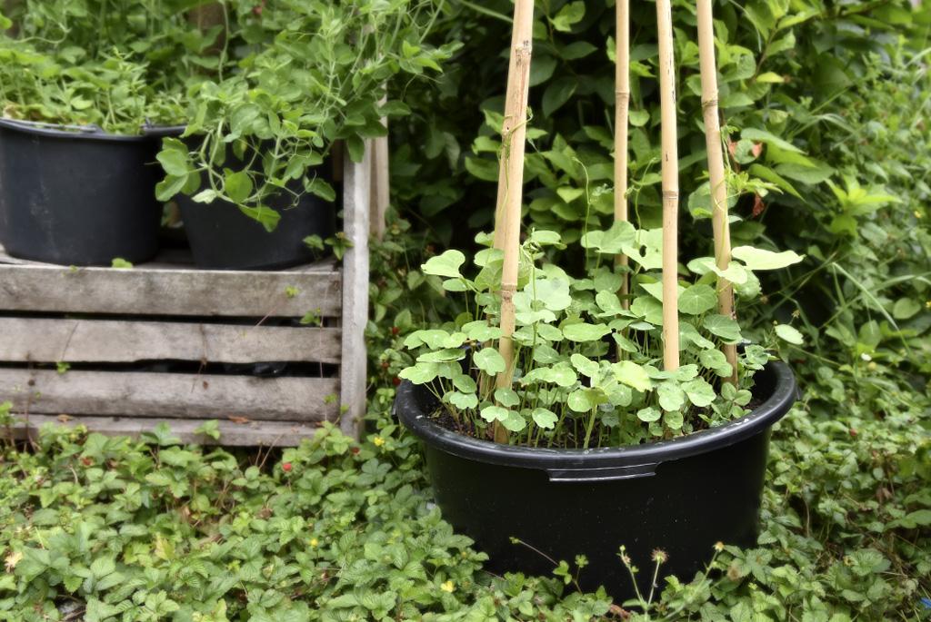 Plantor på tillväxt.