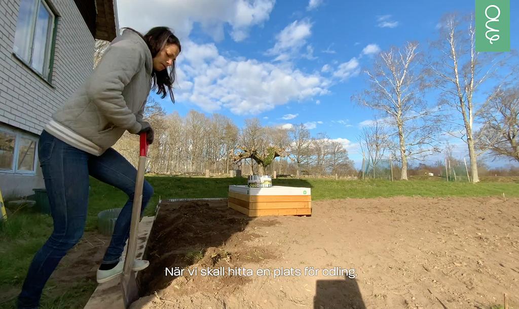 Victoria anlägger en ny odlingsyta.