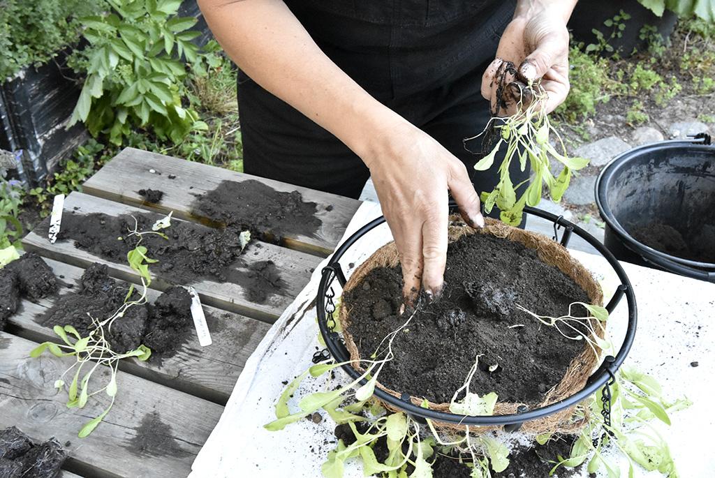 Varva filt, jord och plantor tills halvan är fylld.