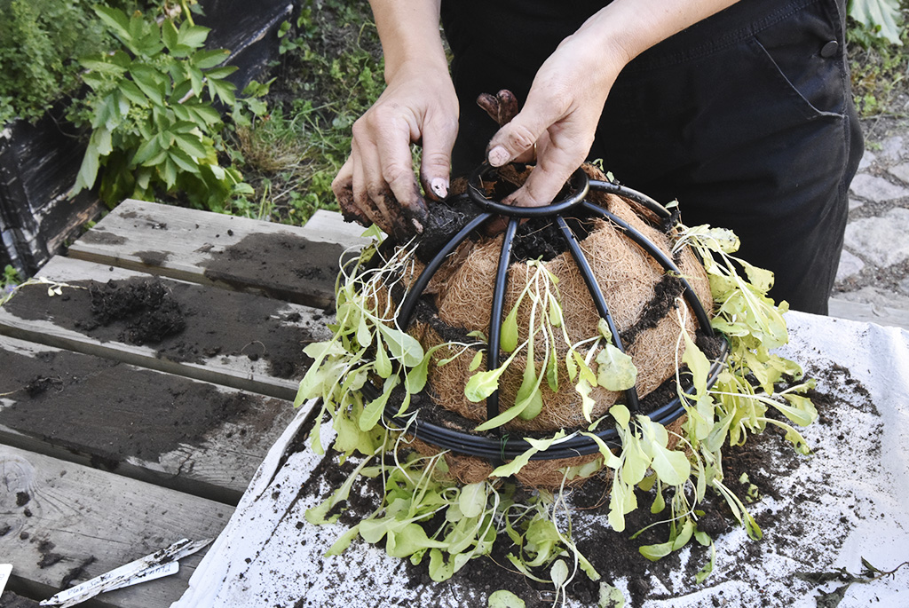 Fortsätt varva filt, jord och plantor i den övre halvan av ampeln, tills den är fylld.
