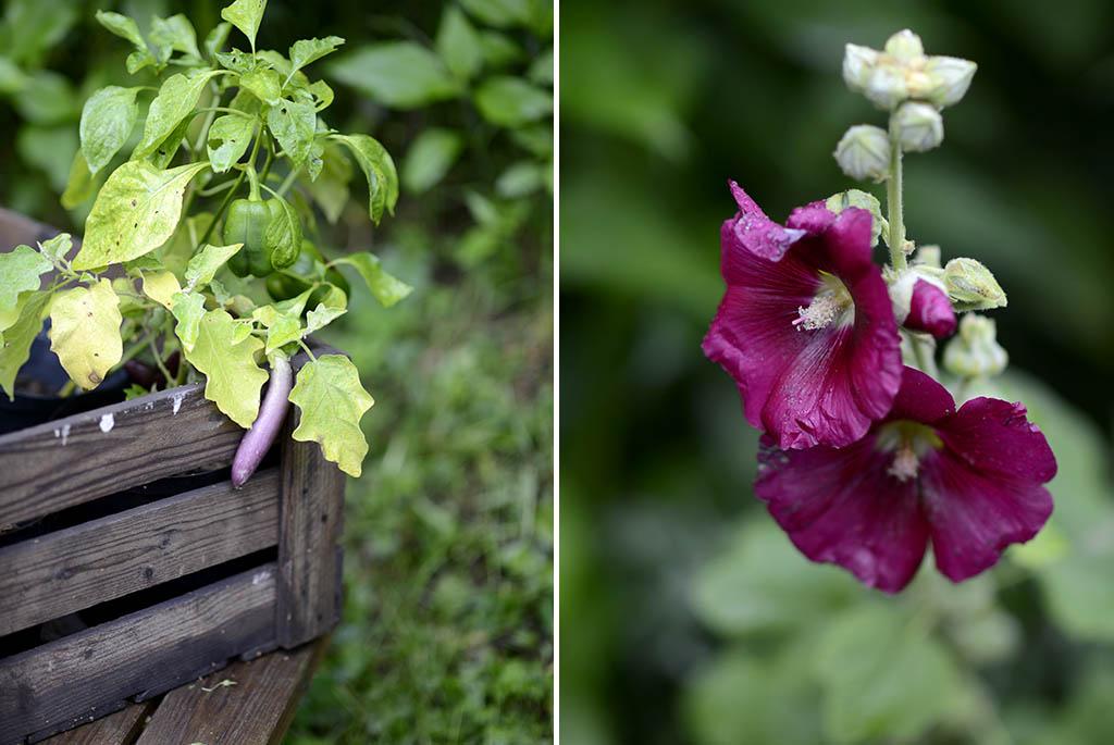 Hos Ekoforia växer både grönsaker och blommor.