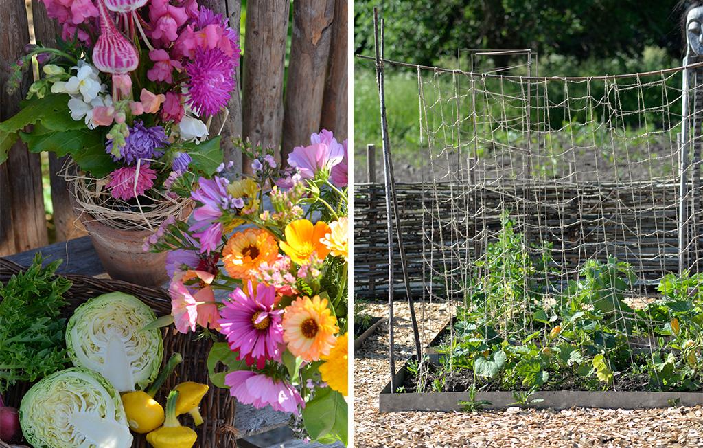 Till vänster syns Annas skörd av flera av årets grönsaker bl.a. vitkål