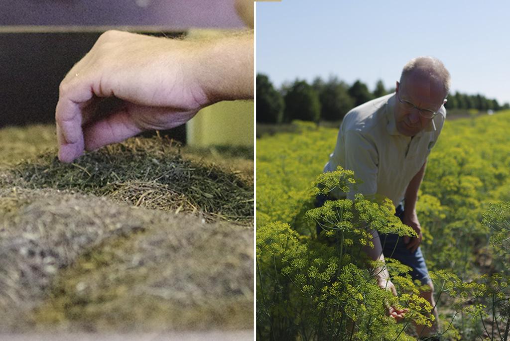 På Olma gård odlas bland annat dill, linser och timjan, men på gården tröskas och rensas även fröer som har odlats på andra håll i landet.