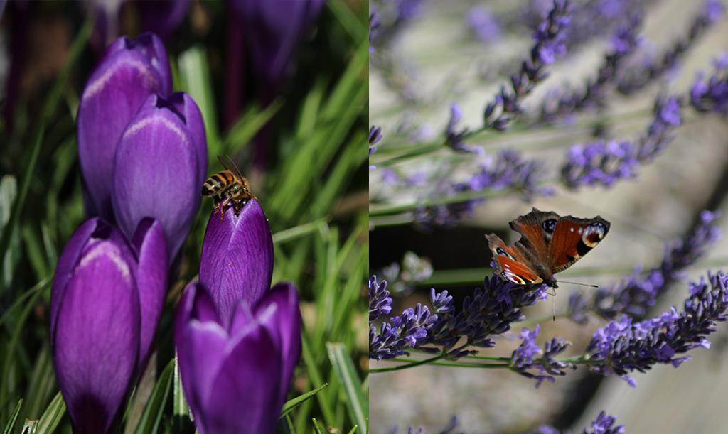 Odla för trädgårdens pollinatörer